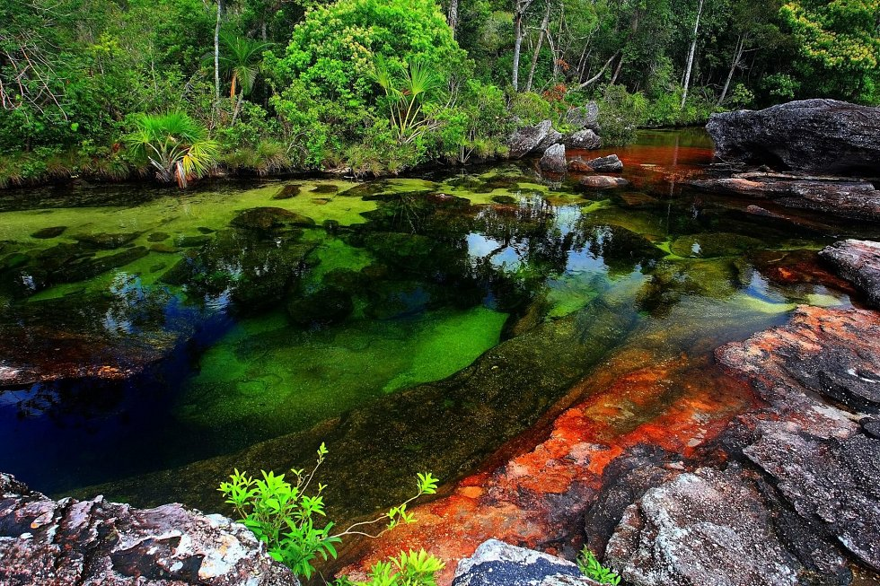 Cano Cristales river in Colombia